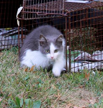 Photo: Alley Cat Allies