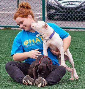 dog adoptions Denver Lincolnton NC