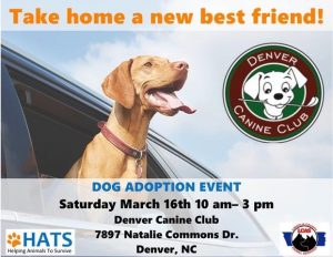 Dog Adoptions at Denver Canine Club @ Denver Canine Club