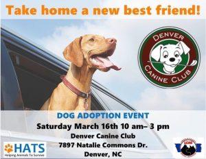Dog Adoptions at Denver Canine Club @ Denver Canine Club
